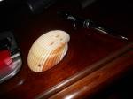 Sea Shell by desk